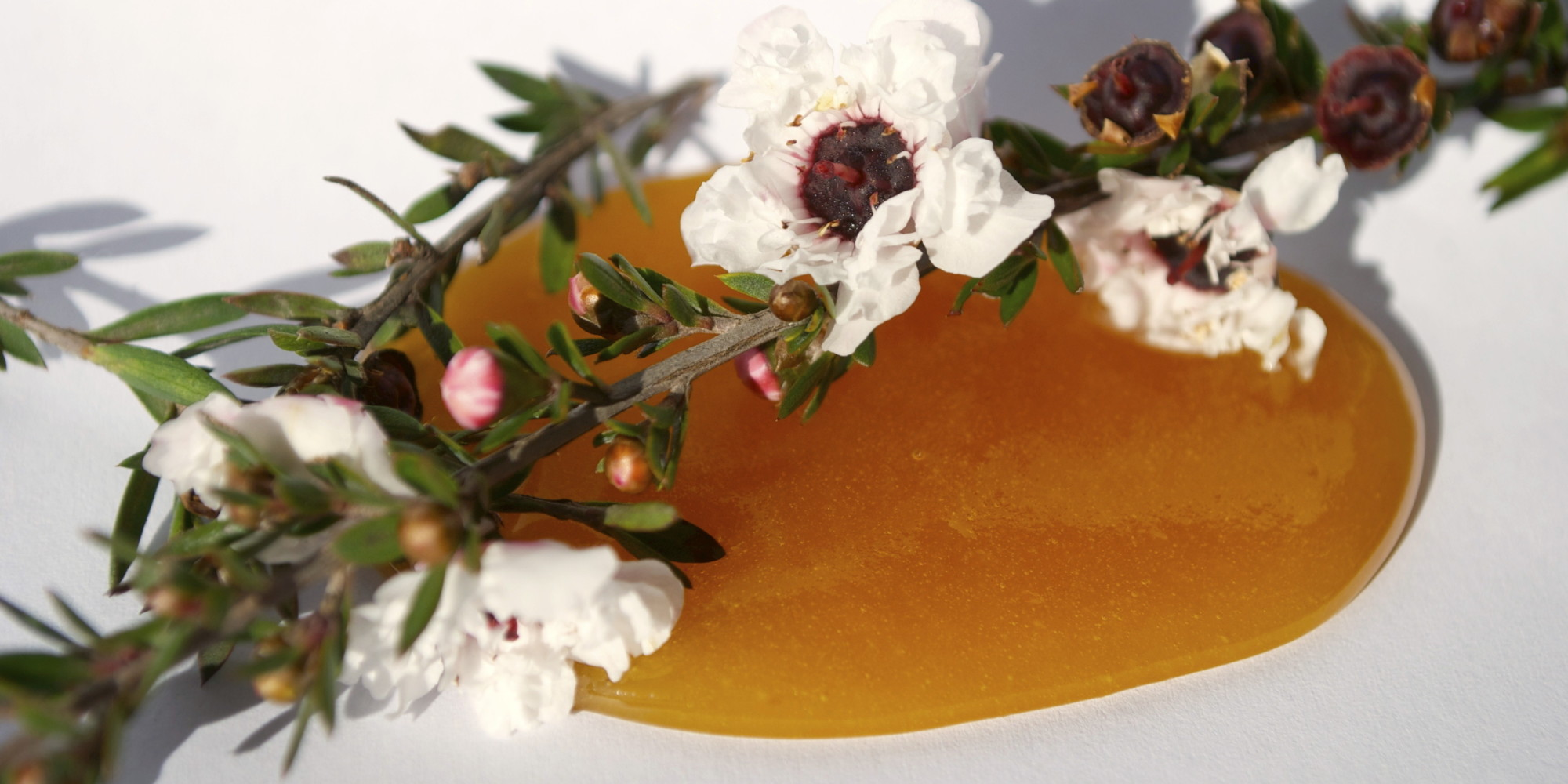 Miere Manuka – un antibiotic natural de excepţie
